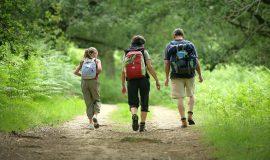 Voyage au cœur du Grand Est avec les visites écotouristiques