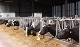 Appel à projets : investissements pour la modernisation des bâtiments d'élevage