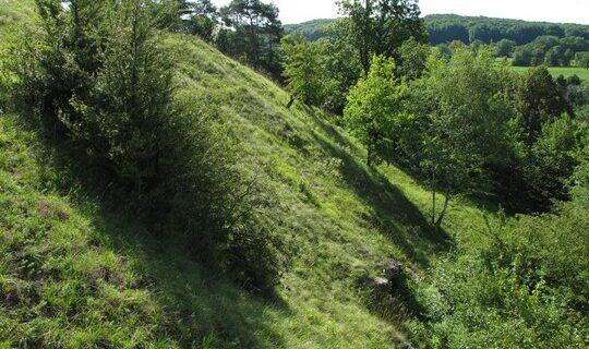Visite de terrain de la réserve naturelle régionale Im'Berg, à Tagolsheim