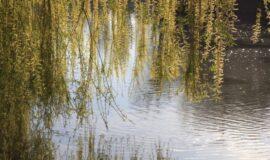 Appel à projets – Mesures AgroEnvironnementales et Climatiques (MAEC)