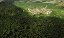 Aide à la plantation et à l'amélioration de la valeur des peuplements forestiers 2018-2020
