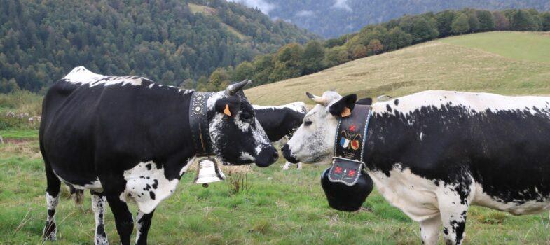La Région soutient l'agriculture de montagne