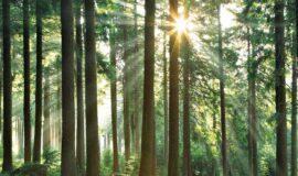 Appel à projets FEADER 2019-2020 : soutien à la desserte forestière