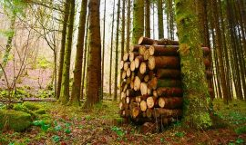 Appel à projets : aide aux entreprises de travaux forestiers