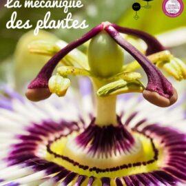 Exposition «La mécanique des plantes»