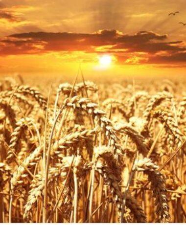Fête des moissons et des récoltes