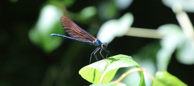 Relever les défis de la biodiversité !