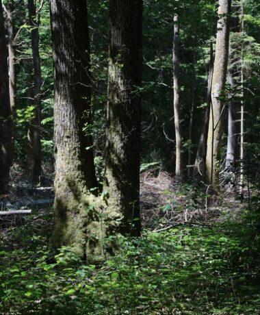 Sortie nature «La vie pas si discrète des arbres»