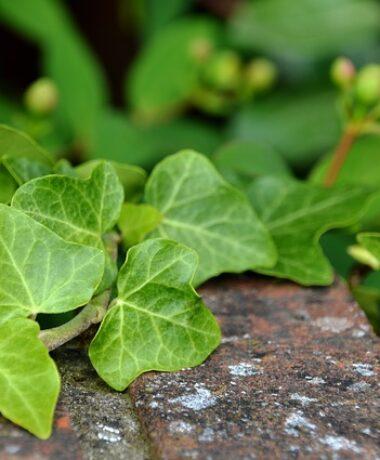 Sortie nature : Enquête nature dans le village de Beaumont