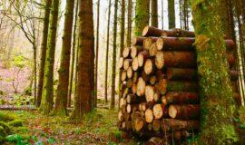 La Région aux côtés de la filière bois