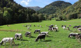Soutenir l'agriculture de la montagne vosgienne