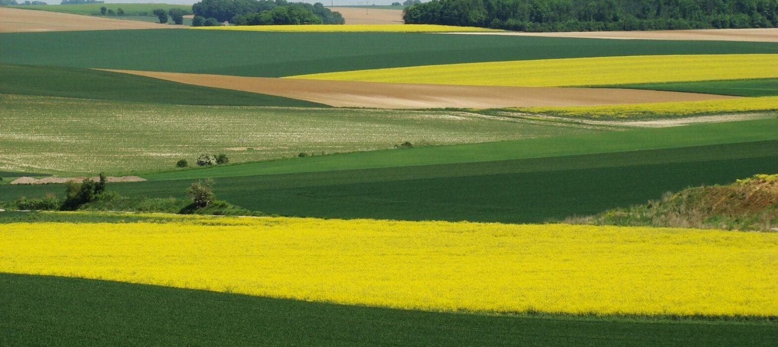 Champs verts et jaunes