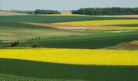 Une plateforme pour permettre l'échange de parcelles agricoles et viticoles