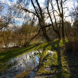 Journée mondiale des zones humides le 2 février : sorties organisées dans le site Ramsar franco-allemand