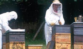 Soigner nos abeilles, soutenir la filière apiculture