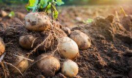 Développement et modernisation des outils de production primaire en agriculture